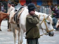 Jeune cavalier, Darjeeling